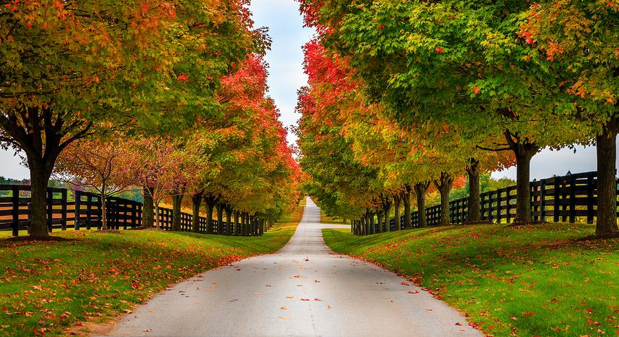 Best Places to see the Fall Leaves in Kentucky